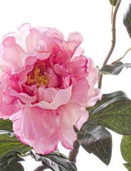 imagem de Ramo Peonía Rosa 76Cm2