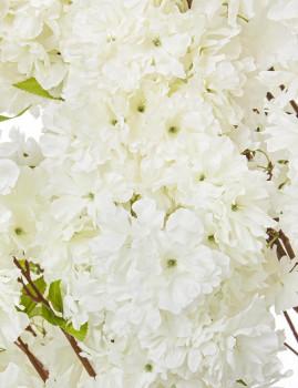 imagem de Planta Begonia Tree Branco H240 S2