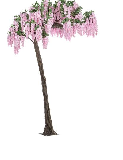 Planta Glycine Tree Rosa H320