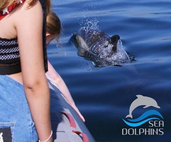 Sea Dolphins - visita às grutas de Benagil e observação de Golfinhos no Algarve