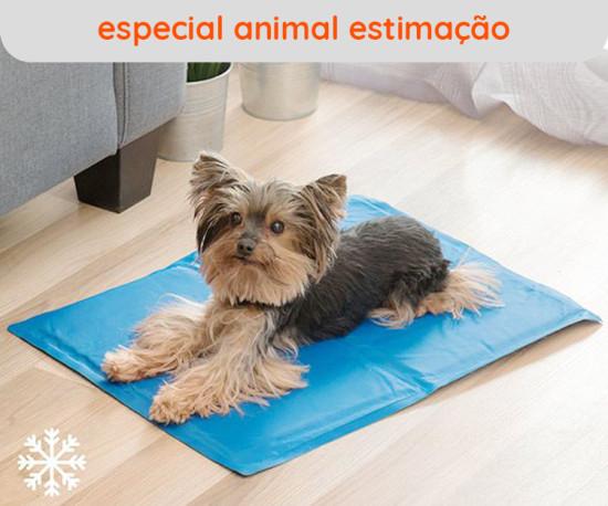Especial Animal Estimação