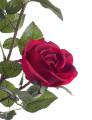 Vaso Rosa Isabel Vermelho